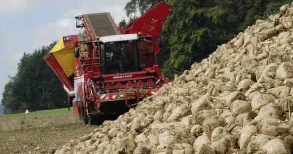 Schweizer Zuckerbranche fürchtet Kürzung von Förderbeiträgen, Flächenverlust und Fabrikschliessungen