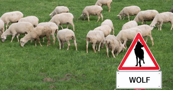 Macro Perspective: Schafe und Wölfe an der Wall Street